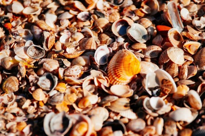 Explore Marco Island To Find Beautiful And Rare Shells