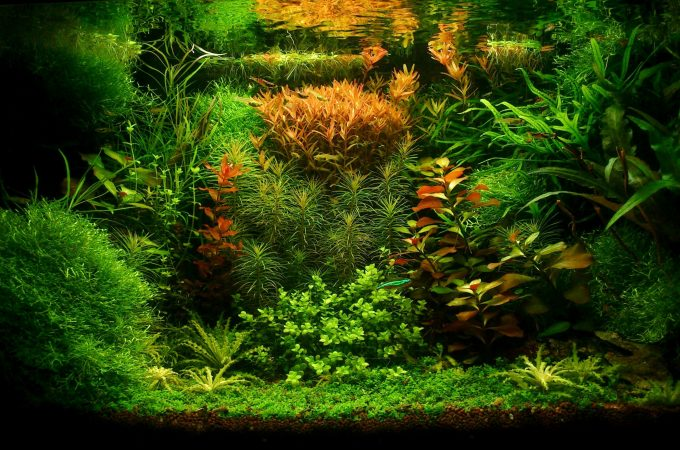 Top Best Types Of Aquarium Plants For Freshwater!!!